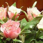 Čestitke za dan žena 8. marec